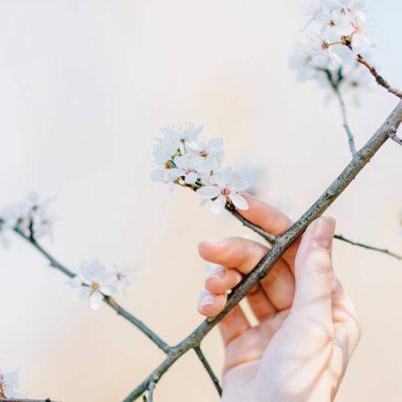 Meet the spring